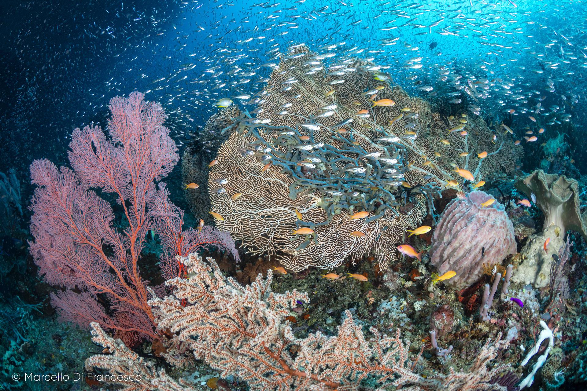 Quante specie vivono nell'oceano?