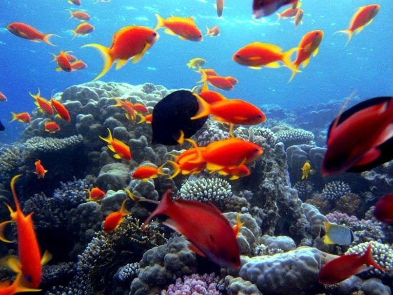 Tropicalizzazione e specie alloctone