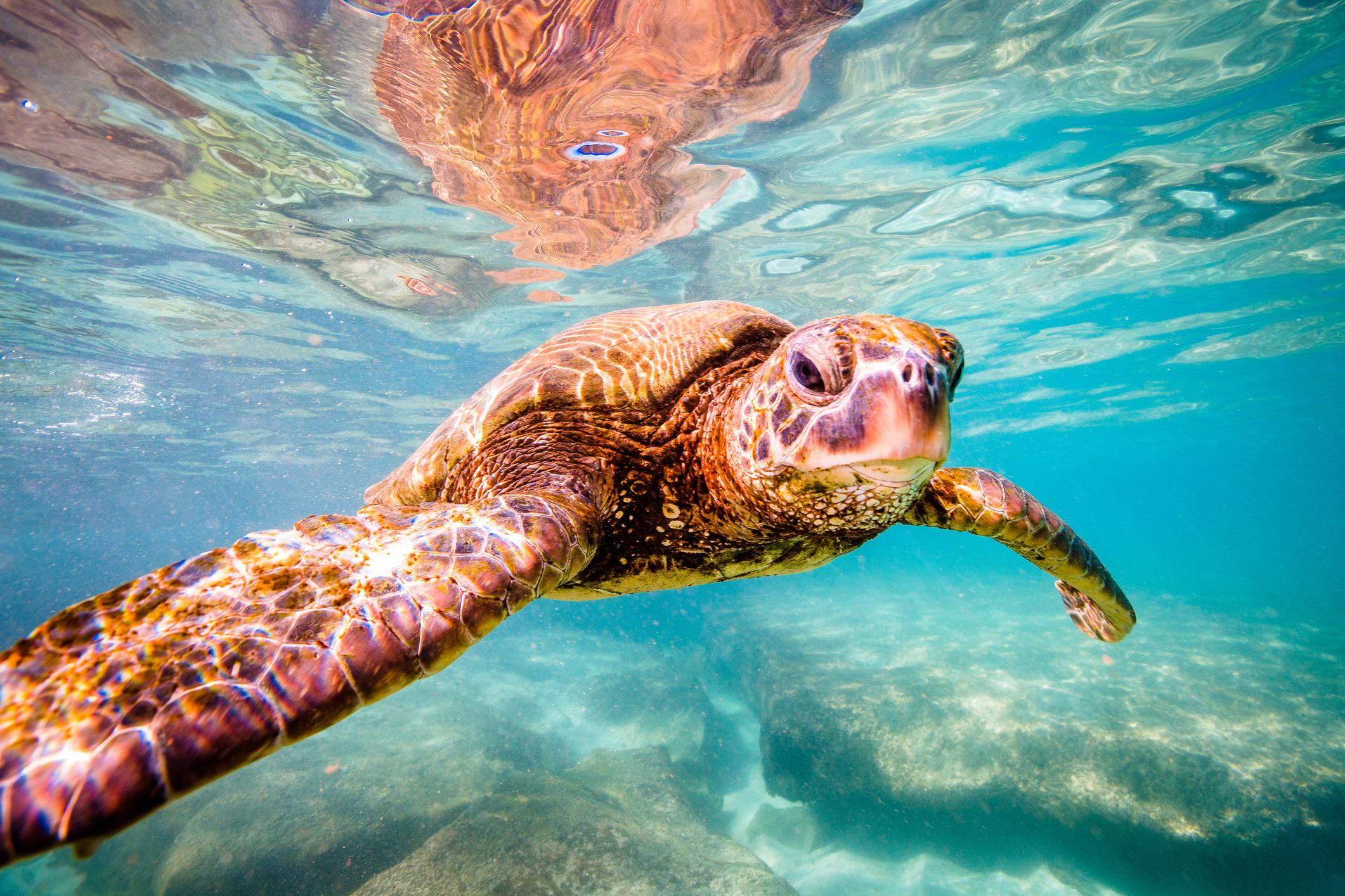 Marevivo nella gestione del Centro di Primo Soccorso per tartarughe marine di Messina
