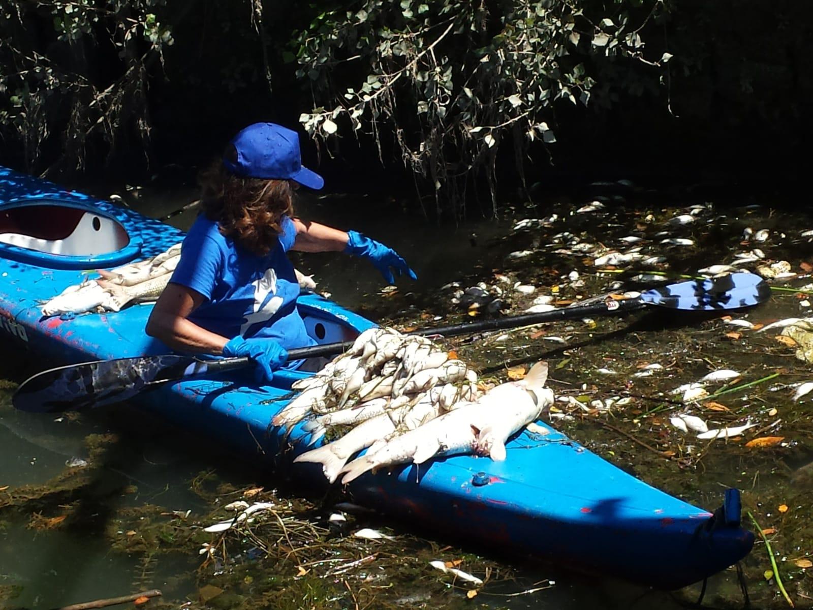 Moria di pesci nel Tevere, Marevivo chiede un Commissario Straordinario