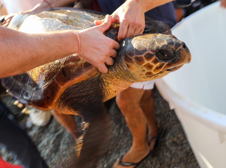 Liberata Carmen, la prima tartaruga Caretta caretta del nuovo Centro di Primo Soccorso di Messina (VIDEO)