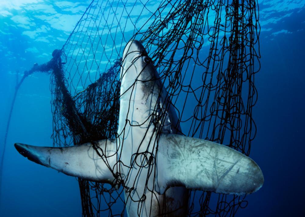 Mare in trappola: ecco come l'overfishing distrugge i nostri mari