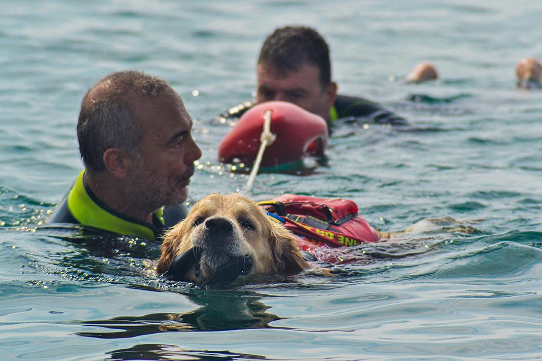 I cani da salvataggio al fianco di Marevivo