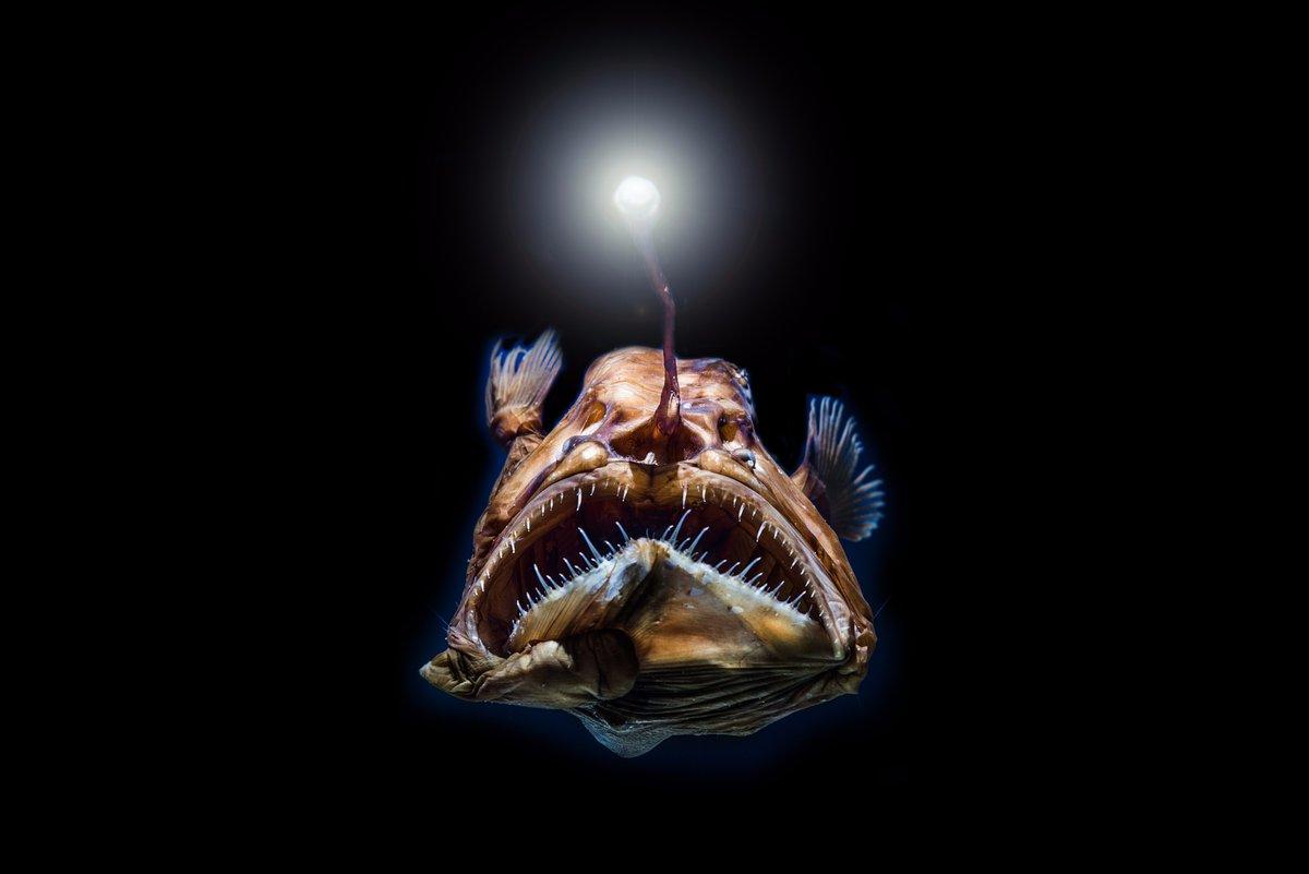 6 creature marine da conoscere ad Halloween