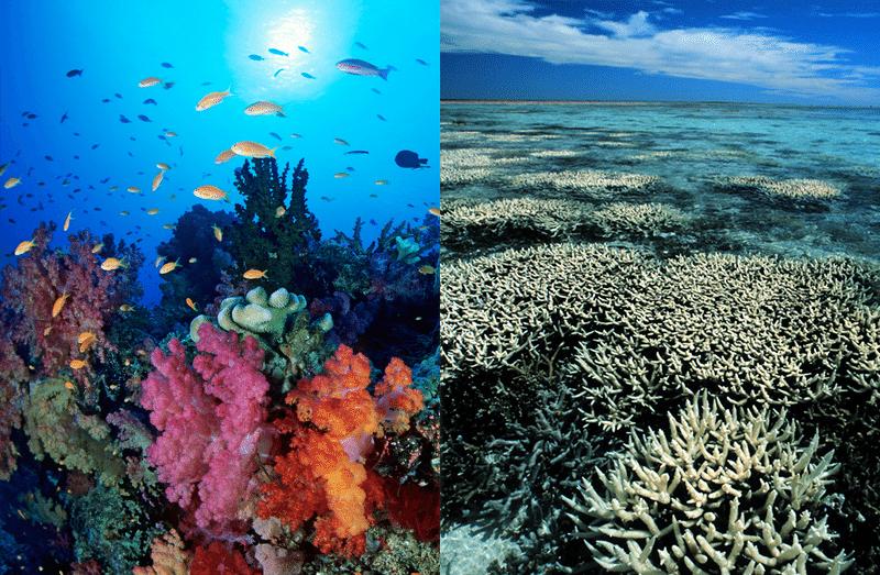 La Grande Barriera Corallina ha perso metà dei suoi coralli. Cosa sta succedendo?