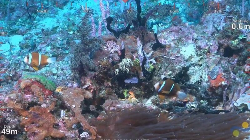 È stata scoperta un'altra enorme barriera corallina in Australia (VIDEO)
