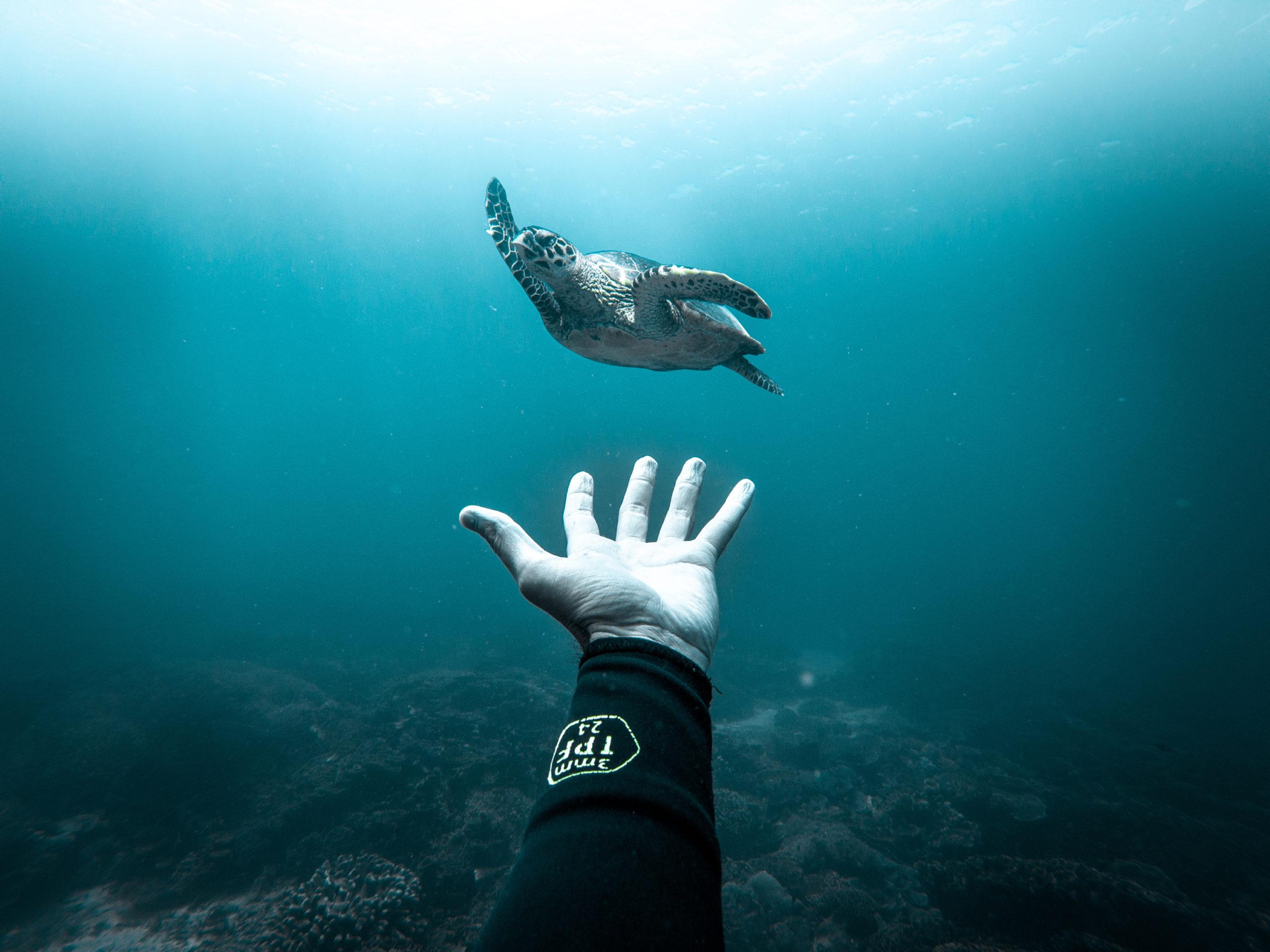 Ocean Film Festival Italia 2020: fino al 12 dicembre tutti i segreti del mare direttamente a casa