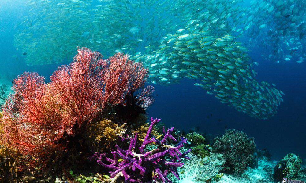 Il Recovery Plan non prende in considerazione gli ecosistemi marini e la loro biodiversità