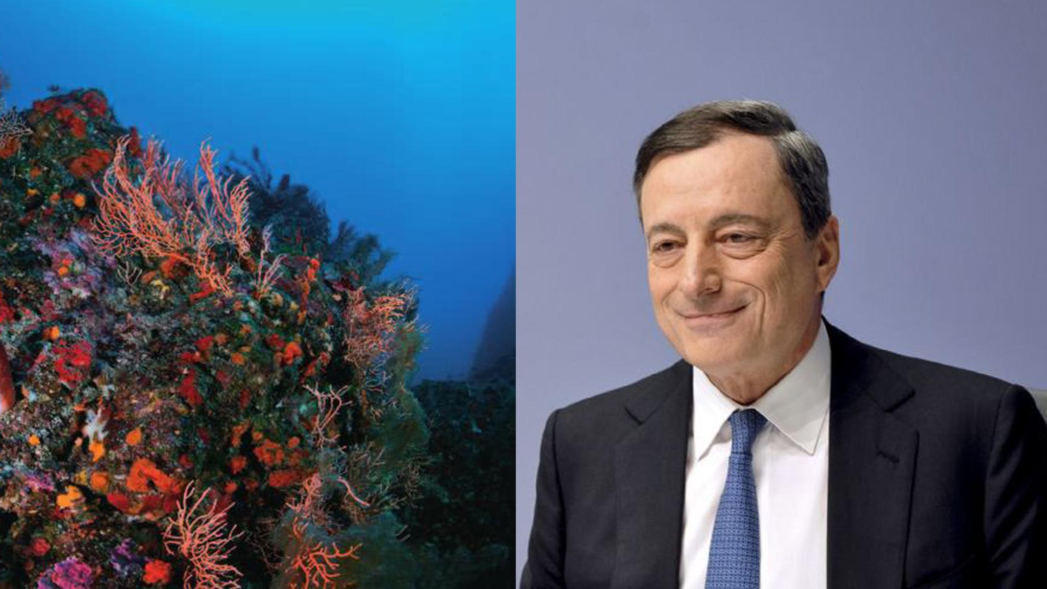 Draghi consulta il mondo ambientalista. Marevivo: «Un segnale importante»