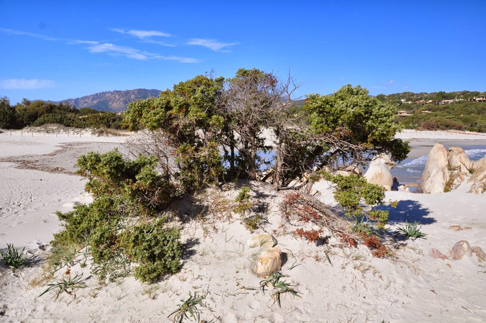 La vegetazione della spiaggia