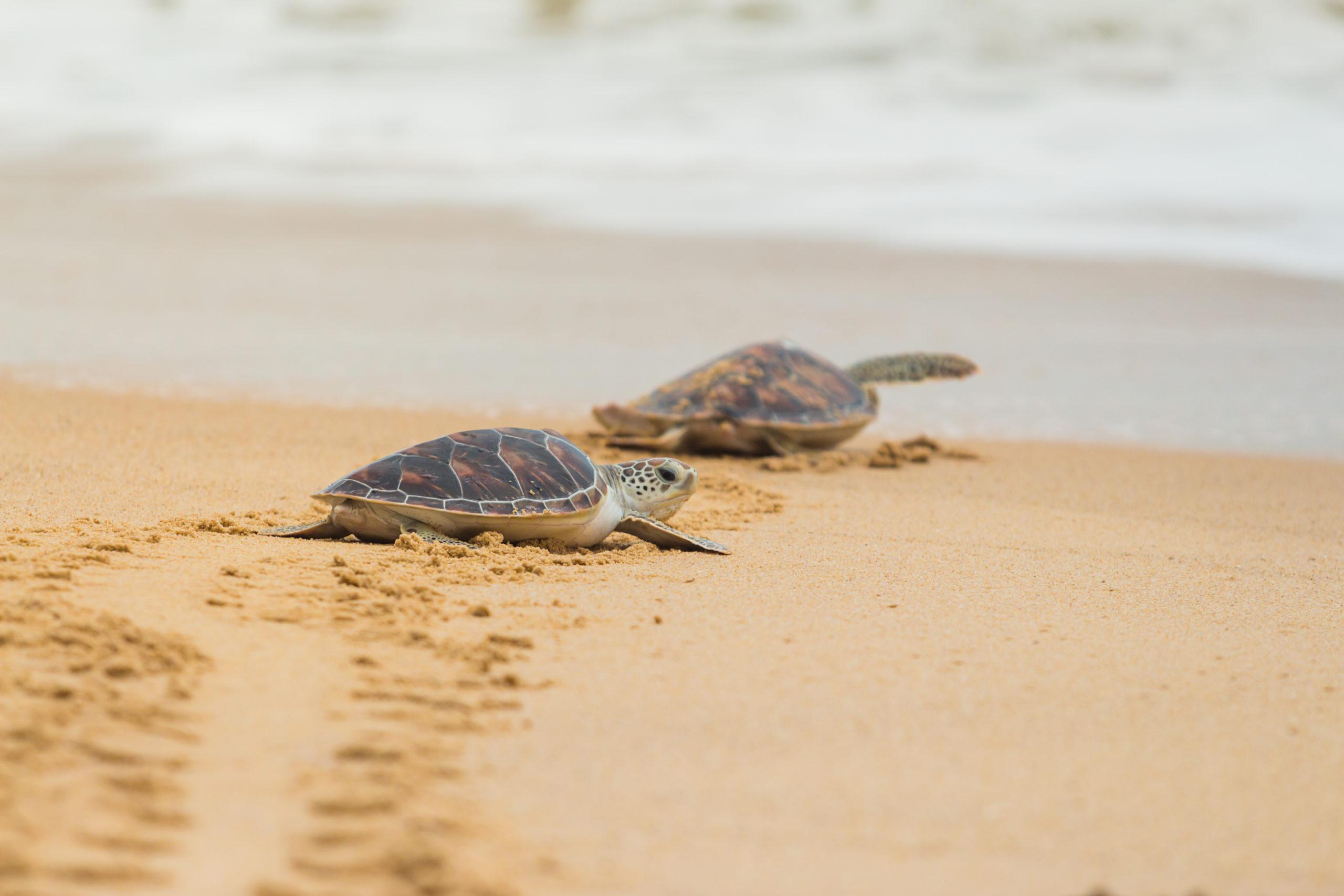 Adotta una spiaggia per proteggere un intero ecosistema