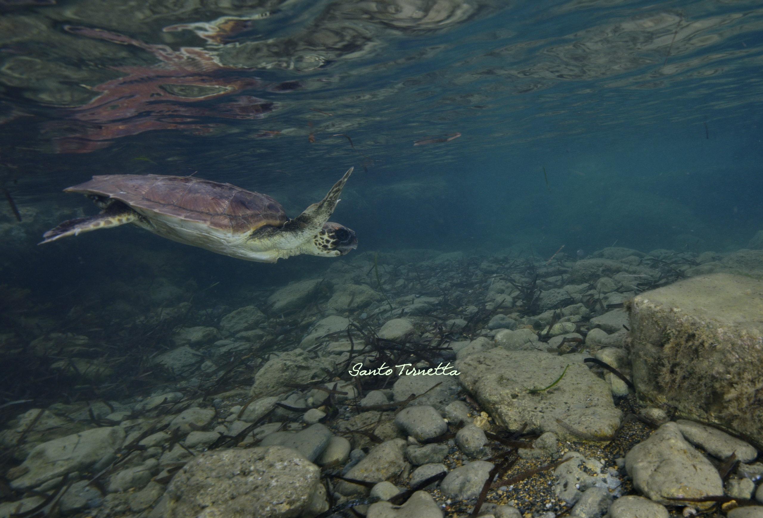 Sciacca, liberate in mare due tartarughe marine salvate