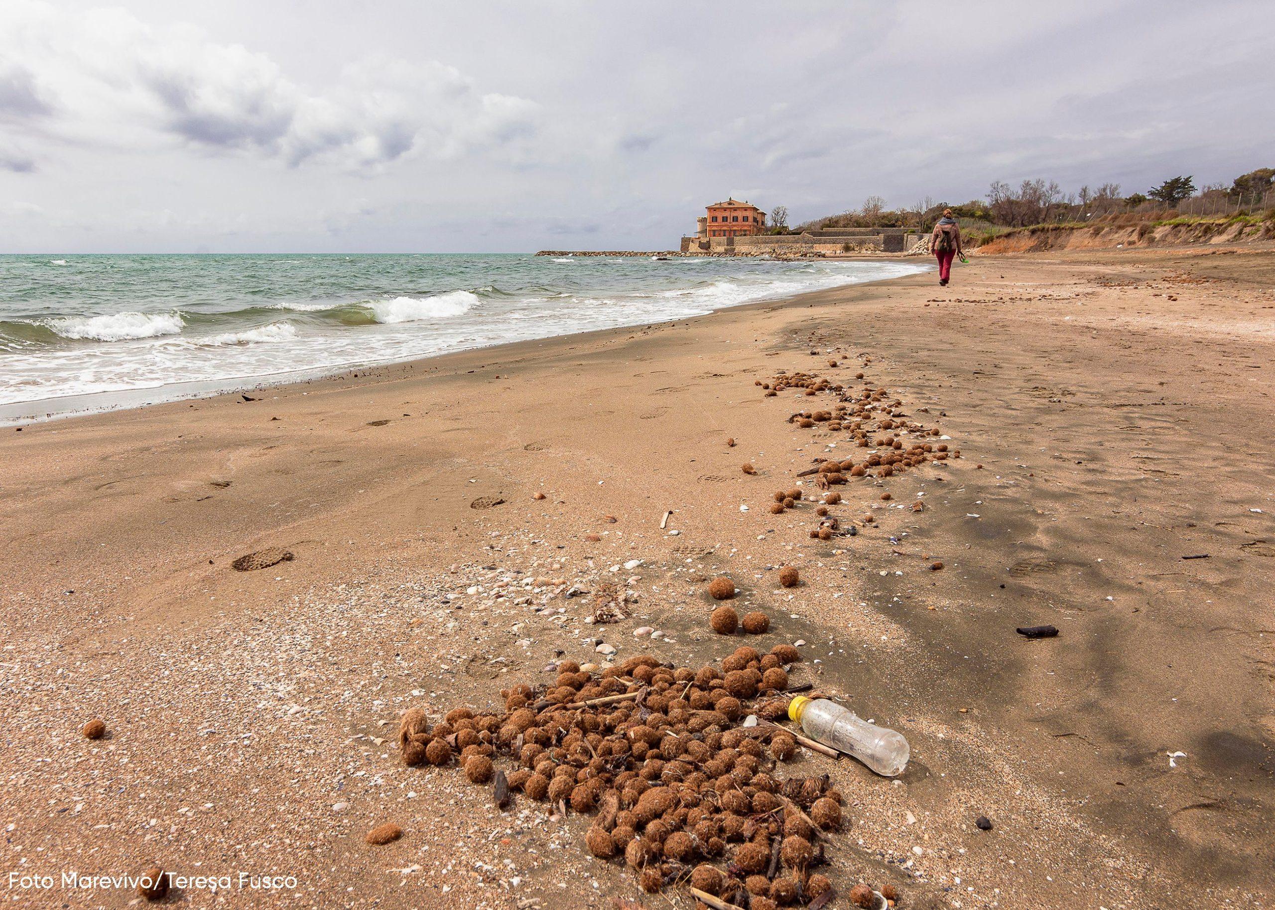 Marevivo e il Gruppo Pellicano Hotels insieme  per la tutela della spiaggia di Marina di San Nicola