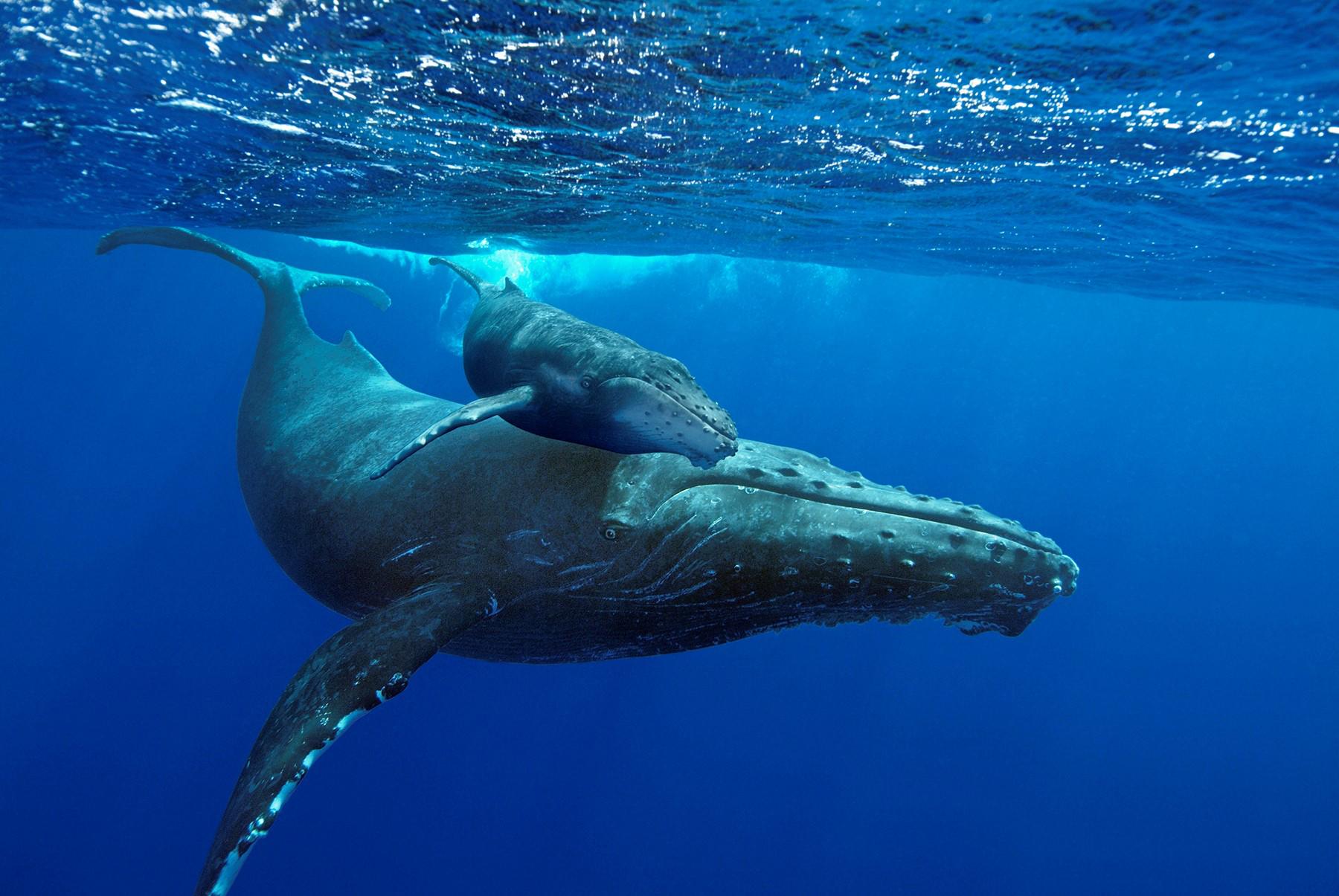 6 card della Festa della Mamma per chi ama il mare